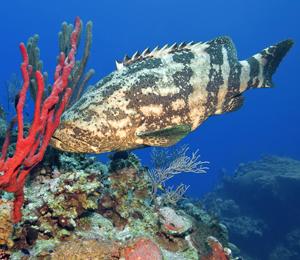 Key West Reef Fishing