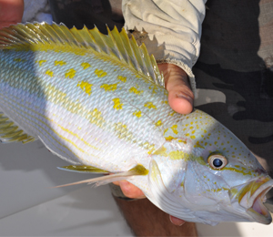 Key West Yellowtail Snapper Fishing in March