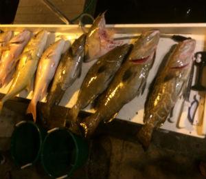 Key West Fishing Report for September