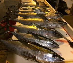 Key West Catch of the Week - 11 Bluefin Tuna!