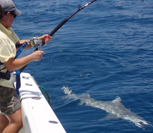 Shark Fishing in Key West